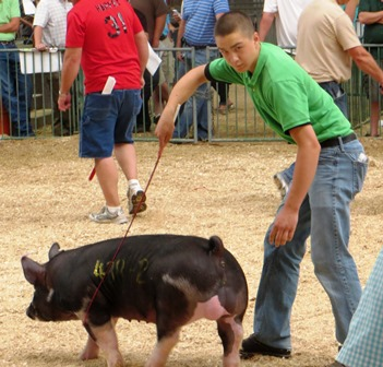 Grant showing Berk boar 4-9 at 2013 STC