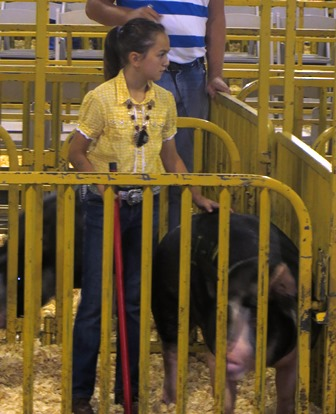 Kedron showing Berk Gilt Ms Nebraska 5-1 at the 2013 Indiana State Fair