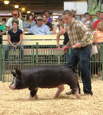 Nelson showing Berk gilt 2-1 at 2013 STC