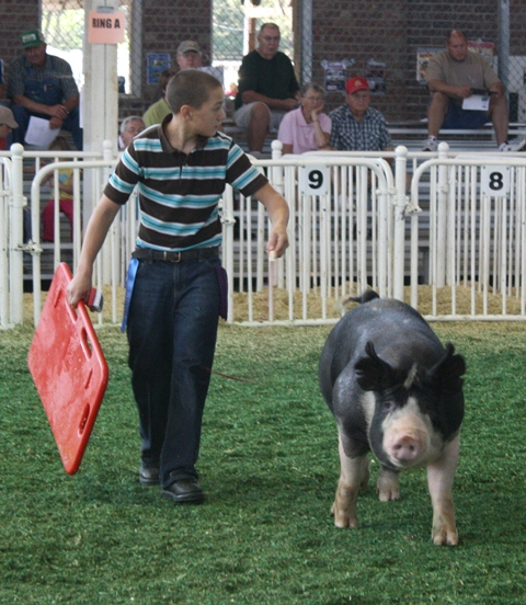 Nelson showing Reserve Champion Berkshire Boar 2011 Iowa State Fair