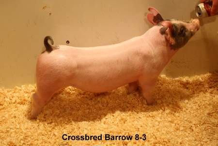 Cross Barrow 8-3 (Twin Turbo 118-7 x Bang This)