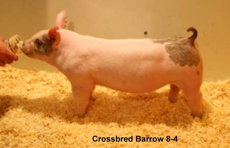 Cross Barrow 8-4 (Twin Turbo 118-7 x Bang This)