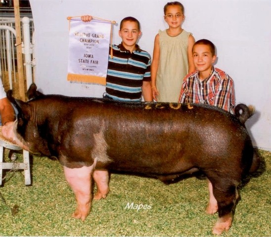 Reserve Berkshire Boar 2011 Iowa State Fair