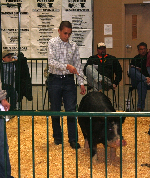 Berkshire Bred Gilt 6-1 Team Purebred 2011