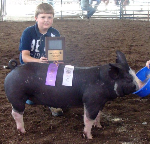 Champion Overall Berkshire Gilt - 2011 Heart of Illinois Fair