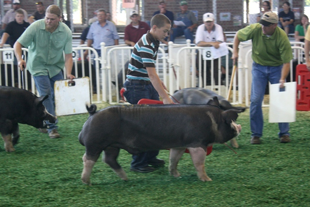 Reserve Champion Berkshire Boar 2011 Iowa State Fair