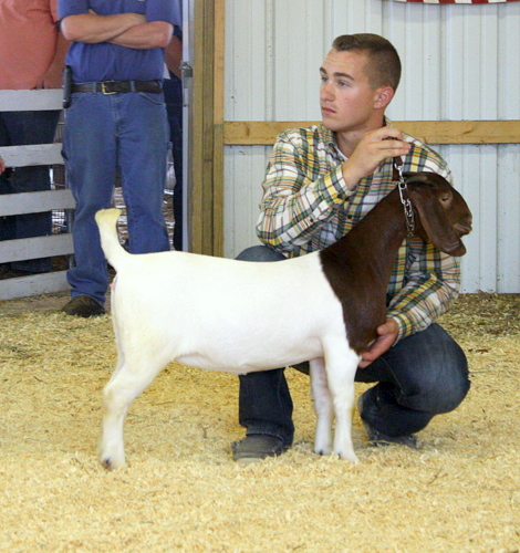 2016 White County Fair, 1st in Class Junior Meat Doe