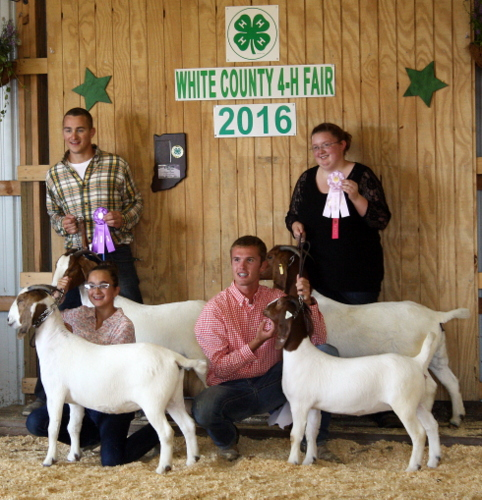 2016 White County Fair, Dam and Daughter Meat Does