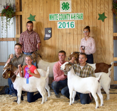2016 White County Fair, Best of Three Meat Does