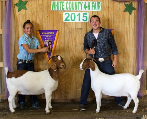 County Born & Bred Meat Does - Champion & Reserve - 2015