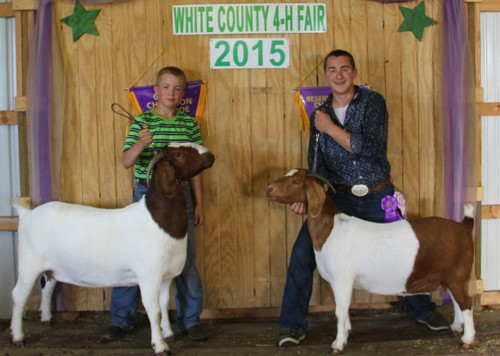 2015 White County Fair Grand & Reserve Champion Meat Does