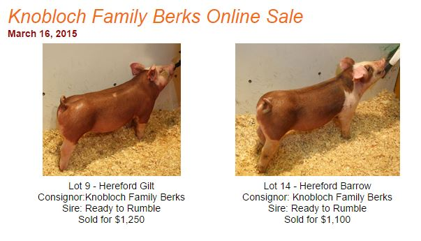 The Pig Planet Online Auction Results 3/16/15